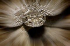 szturmowy wąż Zdjęcie Royalty Free