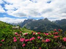 Szwajcaria Alpens zdjęcie stock