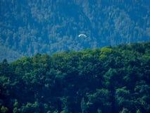 Szwajcaria, Lauterbrunnen, drzewa R W lesie PRZECIW niebu zdjęcie stock
