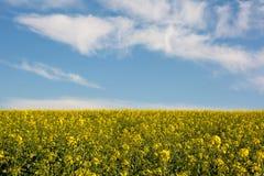 Szwajcarski rolnictwo roślina dla zielonej energii - pole rapeseed z piękną chmurą - Zdjęcia Stock
