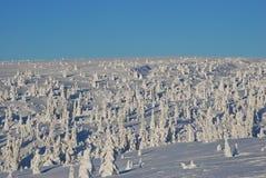 Szwecji krajobrazowa zimy. Zdjęcie Stock
