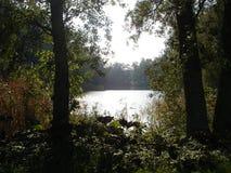 Szwedzcy jeziorni widoczni przelotowi drzewa zdjęcia stock