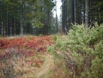 Szwedzi kształtują teren w jesieni w lesie zdjęcia stock