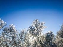 Szwedzi winterday Zdjęcia Stock