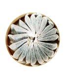 Szwedzka porcji tabaka odizolowywająca na białym tle zdjęcie stock