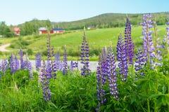 Szwedzki wiejski lato krajobraz Zdjęcie Stock