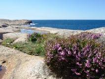 Szwedzki zachodnie wybrzeże Zdjęcie Royalty Free