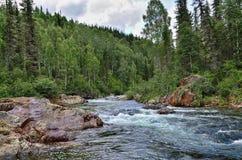 Szybka bieżąca halna rzeka wśród zwartych lasów i ogromnych kamieni Zdjęcie Royalty Free