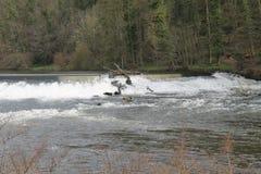 Szybka Bieżąca Szeroka rzeka Fotografia Royalty Free