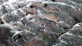 Szybka bieżąca woda w lasowej rzece zbiory wideo