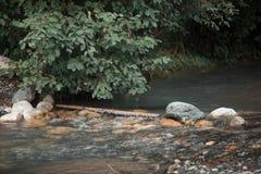 Szybka halna rzeka płynie obok zielonego lasu Zdjęcie Stock