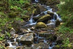 Szybka halna rzeka, sammer w Carpathians, Ukraina obraz royalty free