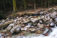 Szybka halna rzeka w Kislovodsk, Rosja Zdjęcie Stock