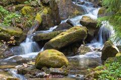 Szybka halna rzeka, wiosna w Carpathians, Ukraina zdjęcie royalty free