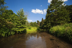 Szybka lasowa rzeka z ulistnieniem na wodnej powierzchni Obrazy Royalty Free