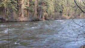 Szybka rzeka w Yukon zdjęcie wideo