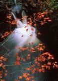Szybka woda pod spadków liśćmi fotografia royalty free