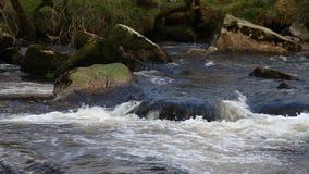 Szybki bieg strumień zdjęcie wideo