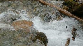 Szybki halny czysty rzeka przepływu zbliżenie zdjęcie wideo