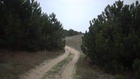 Szybki jeżdżenie samochodem wzdłuż piaska wzdłuż wiejskiej drogi w rzadkim sosnowym lesie zdjęcie wideo