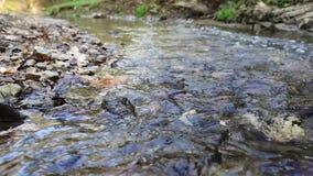 Szybki lasowy strumienia zbliżenie zdjęcie wideo