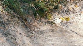 Szybki przepływ góry wody zakończenie w górę widoku Czysty halny strumień z jasną wodą płynie przez zielonego terenu zdjęcie wideo