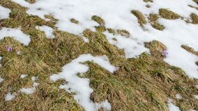 Szybki roztapiający śnieg na łąkowym czasu upływie zdjęcie wideo
