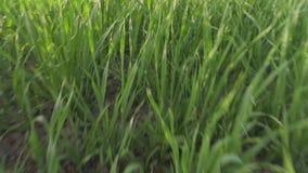 Szybki ruch przez zielonej trawy zbiory