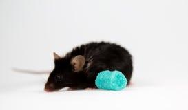 Szybkie żarcie i otyła mysz Obrazy Stock