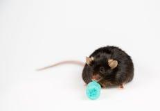 Szybkie żarcie i otyła mysz Zdjęcia Royalty Free
