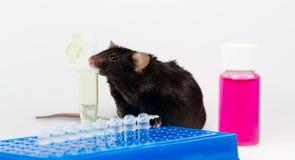 Szybkie żarcie i otyła mysz Zdjęcie Stock