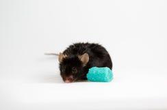 Szybkie żarcie dla myszy Zdjęcia Stock