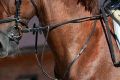 Szyja sporta koń Koński przedstawienia doskakiwanie w szczegółach zdjęcie stock