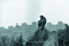 szympans przy wierzchołkiem rockery innocent ono przygląda się obrazy stock