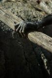 Szympans ręka w zoo - Zwierzęcy okrucieństwa pojęcie Zdjęcia Royalty Free