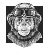 Szympansa lotnika Małpi jest ubranym kapelusz Druk dla dzieci odziewa, trójnik, koszulka Pilotowy dzikie zwierzę zdjęcie stock