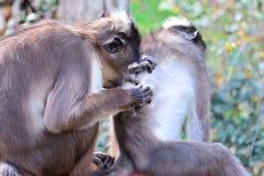 Szympansy w lesie Zdjęcia Royalty Free