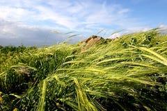 szypułka pola zdjęcie stock