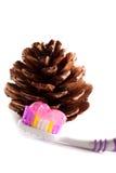 szyszkowy sosnowy toothbrush Zdjęcie Royalty Free