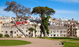 Tánger, Marruecos Opinión de la calle con los árboles viejos Fotos de archivo libres de regalías