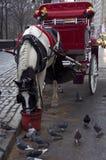 Táxi considerável New York City com pombos Imagens de Stock