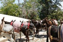 Táxi de Lindos, o Rodes, Greece Foto de Stock