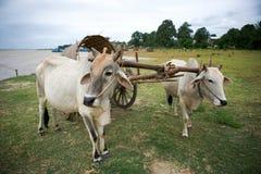 Táxi de Mingun, Myanmar Foto de Stock
