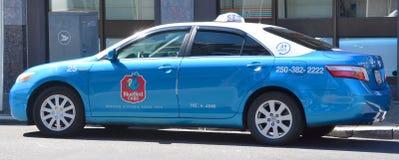 Táxi do azulão-americano Foto de Stock