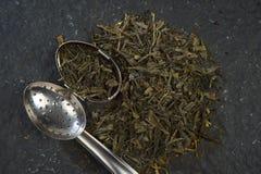 Tè verde przeciwu infusore Zdjęcie Stock