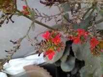 Tão belamente imagem da flor Foto de Stock