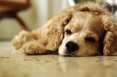 Tão sonolento Fotos de Stock