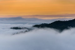 Täckande träd för mist och för moln på berget Arkivbild