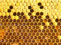 Täcker med en plasthinna biet, nektar, honung och pollen Royaltyfri Fotografi