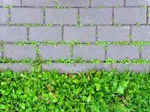 Täckning för konkret trottoar med att spira grönt gräs arkivfoton